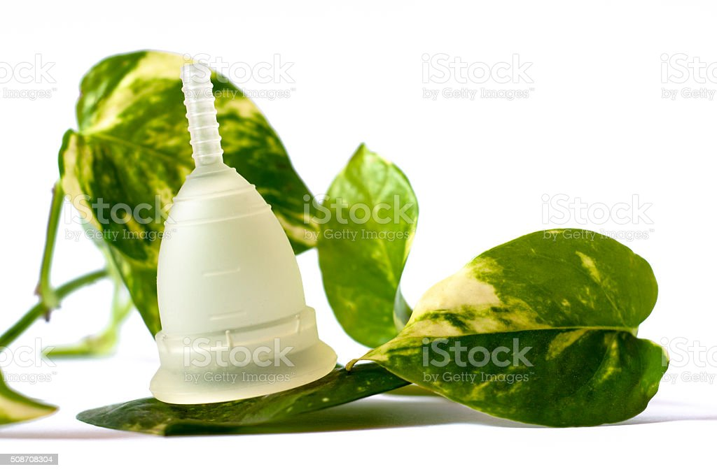 White menstrual cup, green leaves isolated white background stock photo