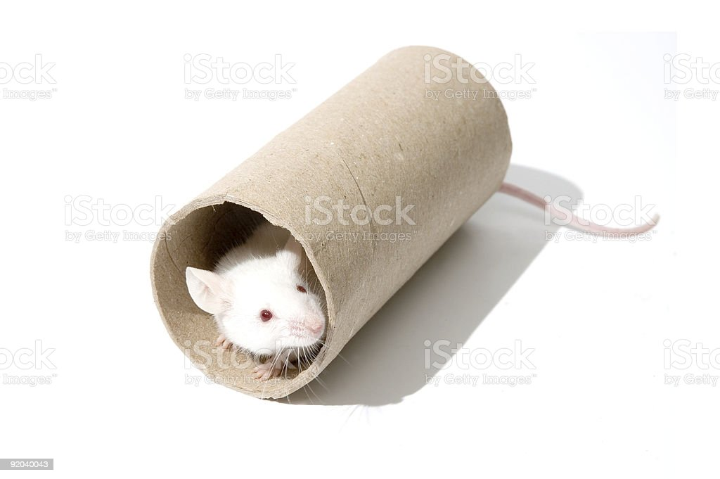 White mice on a roller royalty-free stock photo