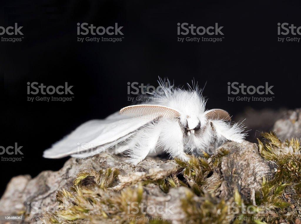 White moth. Macro photo. stock photo