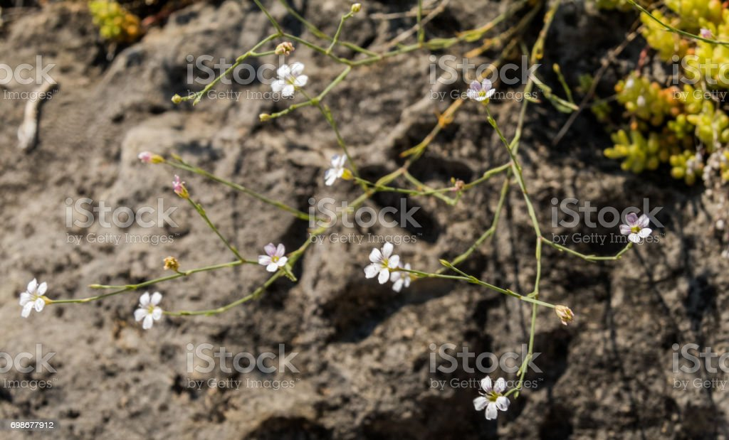 White mountain Flower stock photo