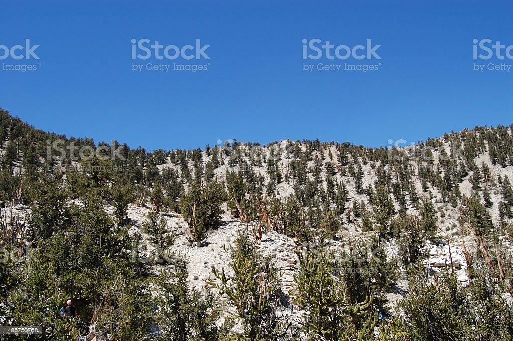 White Mountains, California stock photo