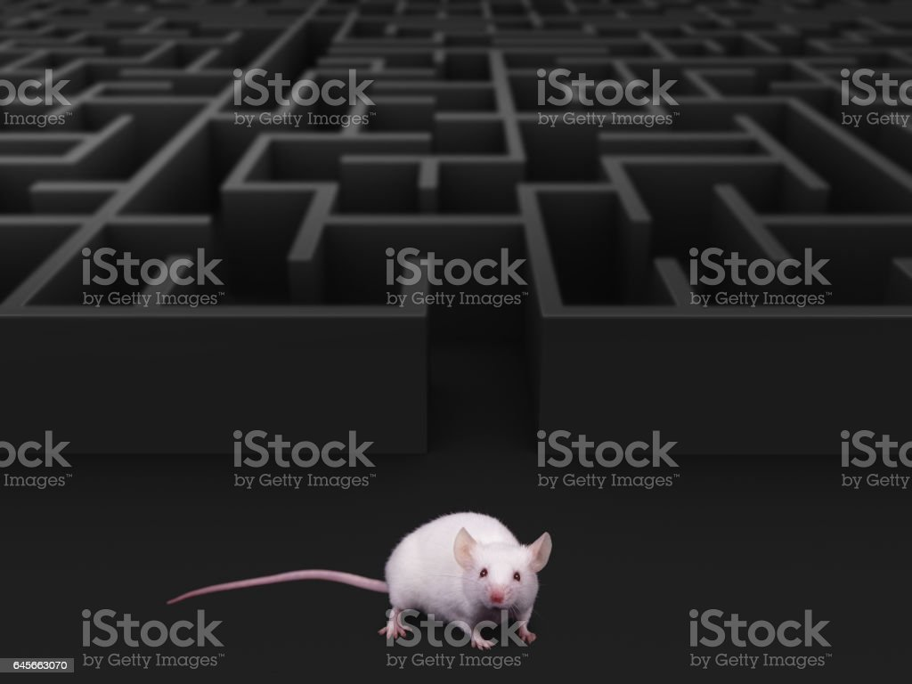 White mouse at maze exit. stock photo
