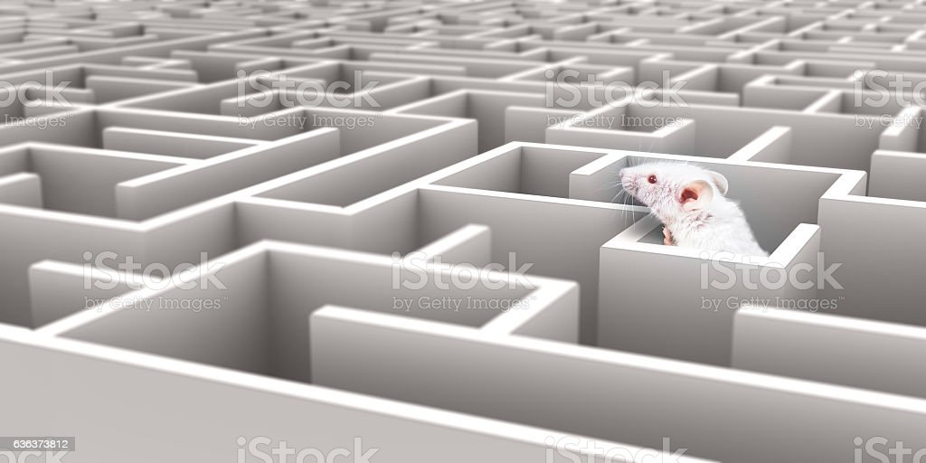 White Mouse in White maze looking over walls stock photo