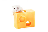 White mouse with emmental cheese