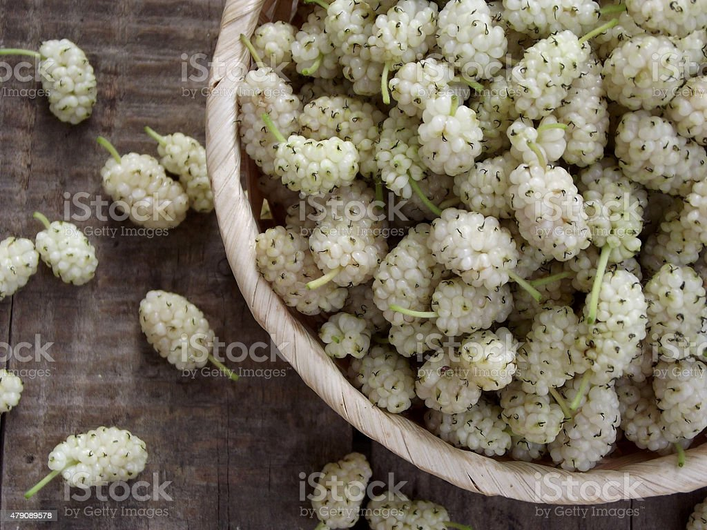 white mulberry stock photo