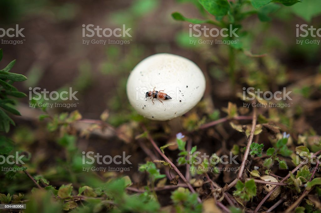 white mushroom, insect, blur background stock photo