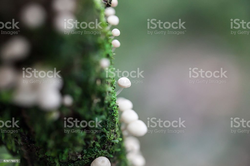 White Mushrooms in the forest stock photo