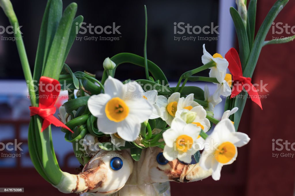 White narcissus growing in the garden, narcissus poeticus stock photo