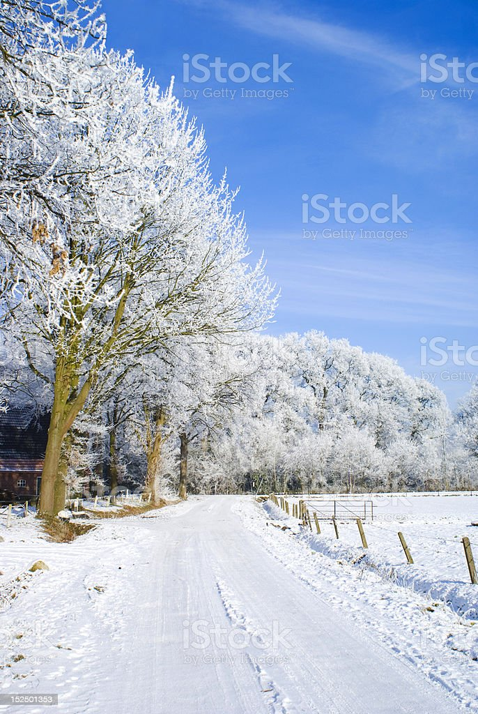 White nature, blue sky. stock photo