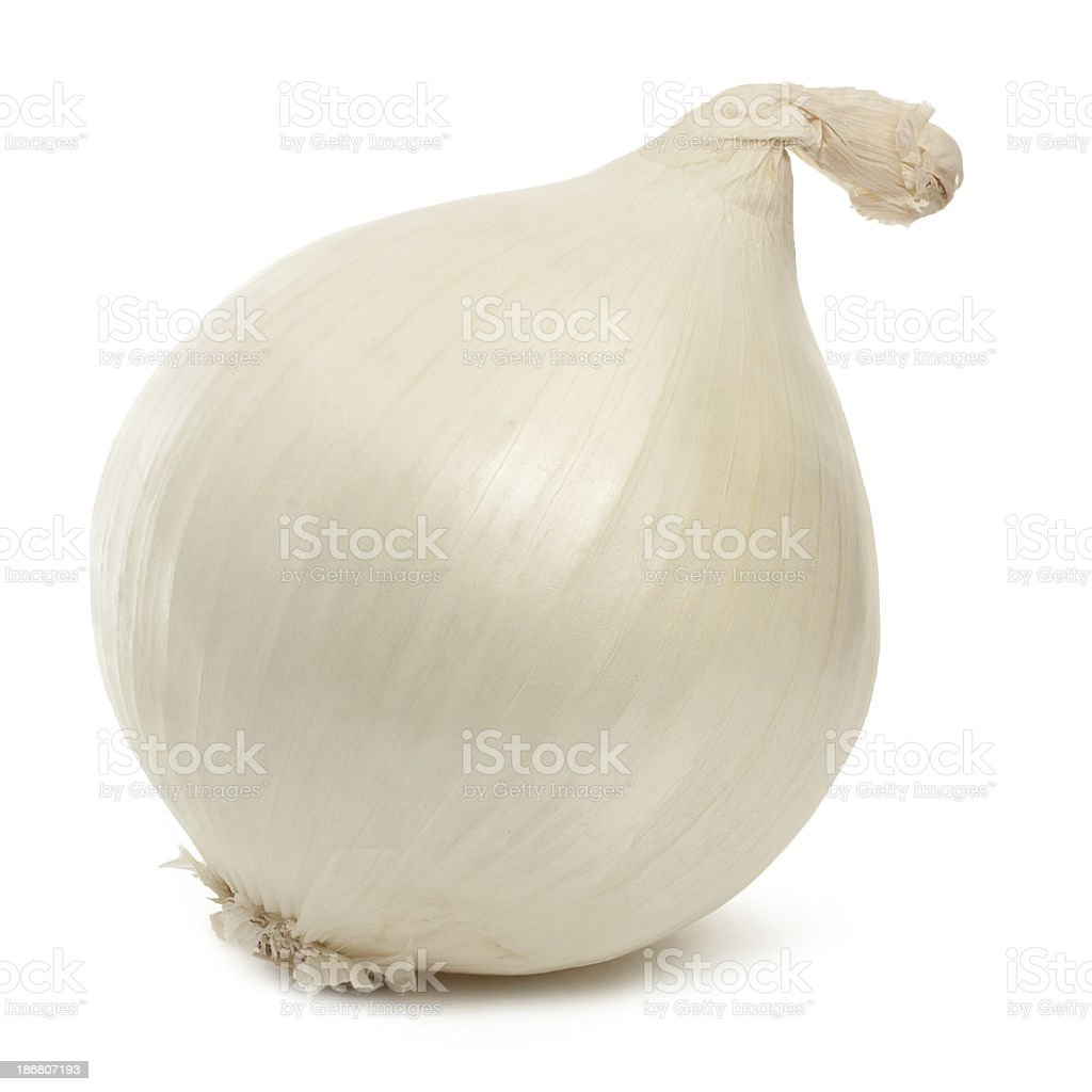 White Onion stock photo