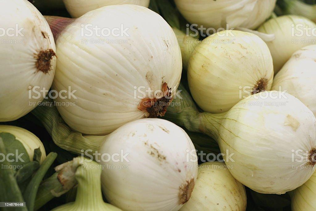 White Onions royalty-free stock photo
