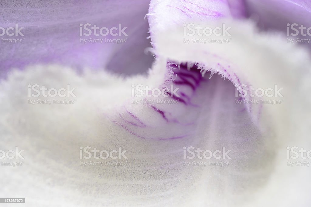 white orchid extreme close up royalty-free stock photo