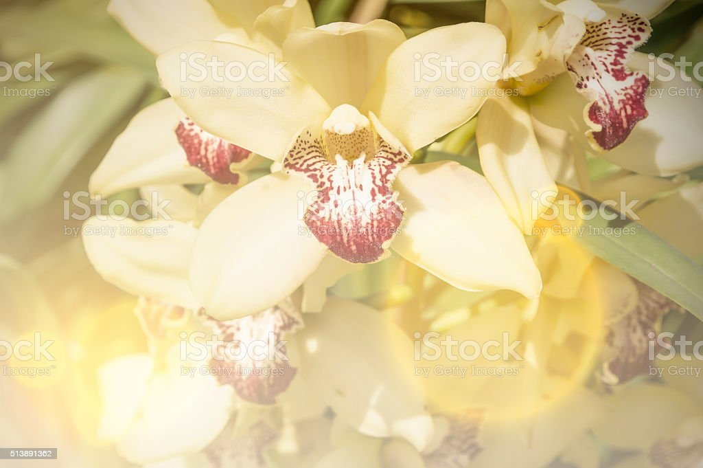 White orchid flower,Vintage stock photo