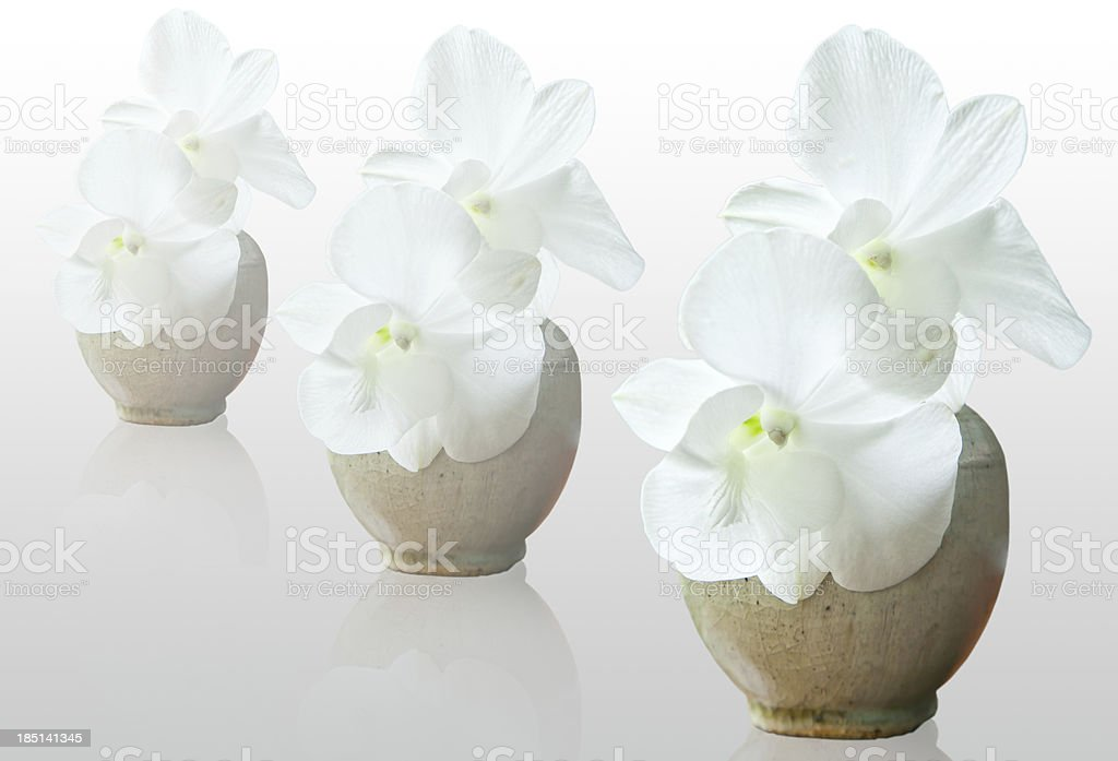 White orchid in the vase royalty-free stock photo