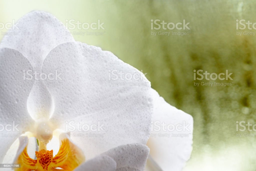 white orchid on a green background at a rainy window stock photo