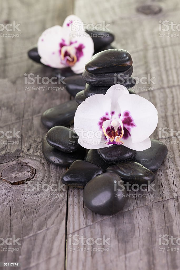 White orchids and black stones stock photo