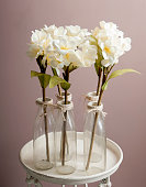 white orchids in a glass bottle