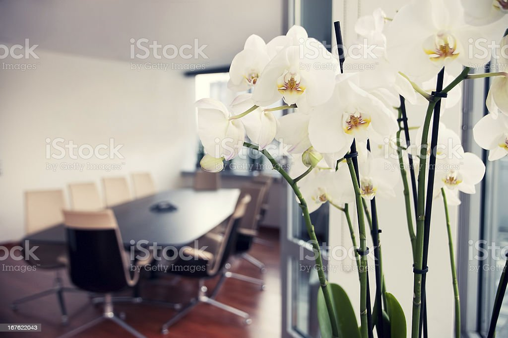 White orchids in conference room, empty office royalty-free stock photo