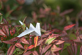 White paper crane on the tree