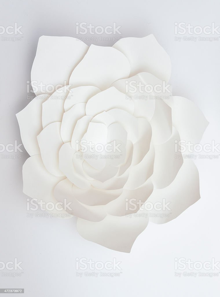 White paper flower isolated on white background stock photo