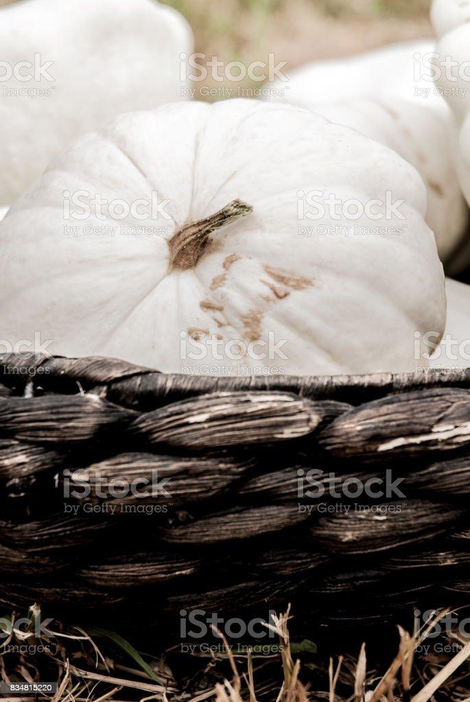 White Pattypan Squash in Basket stock photo