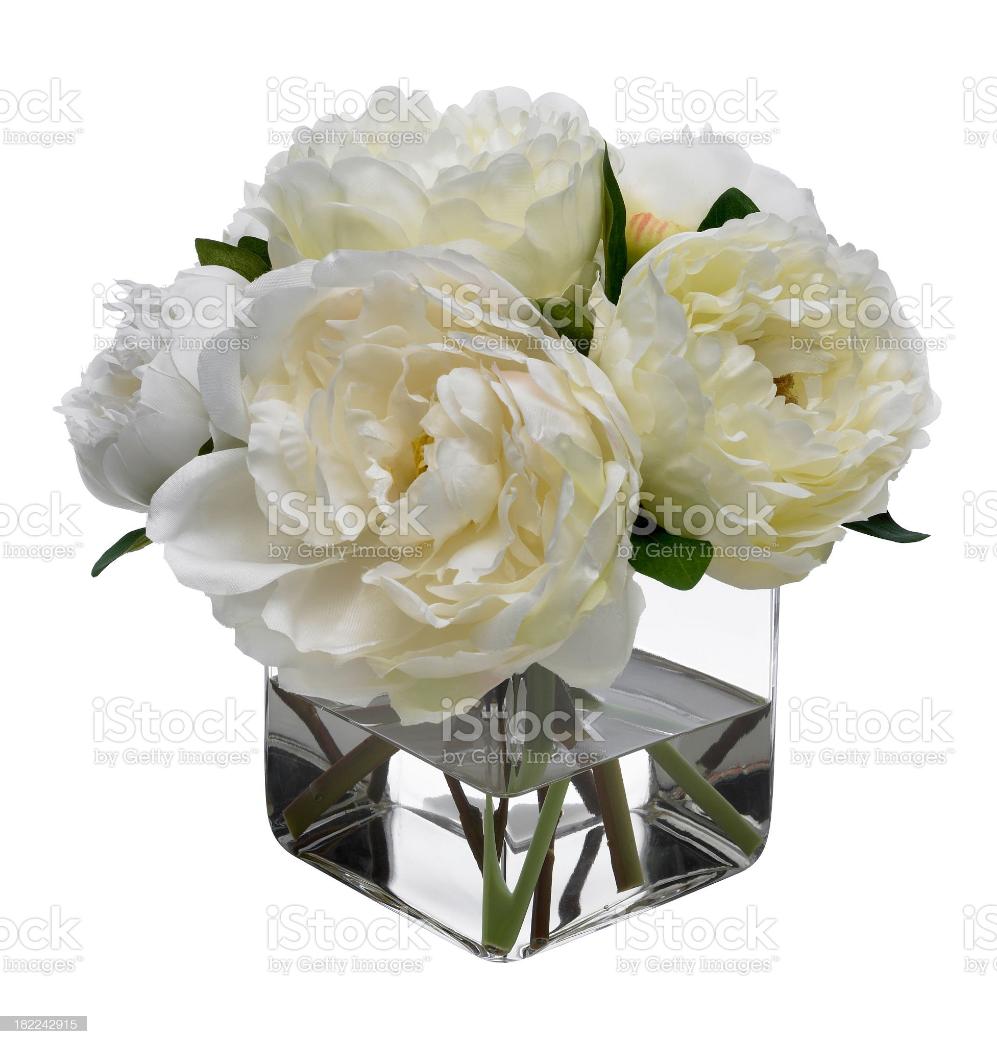 White Peonies on white background royalty-free stock photo