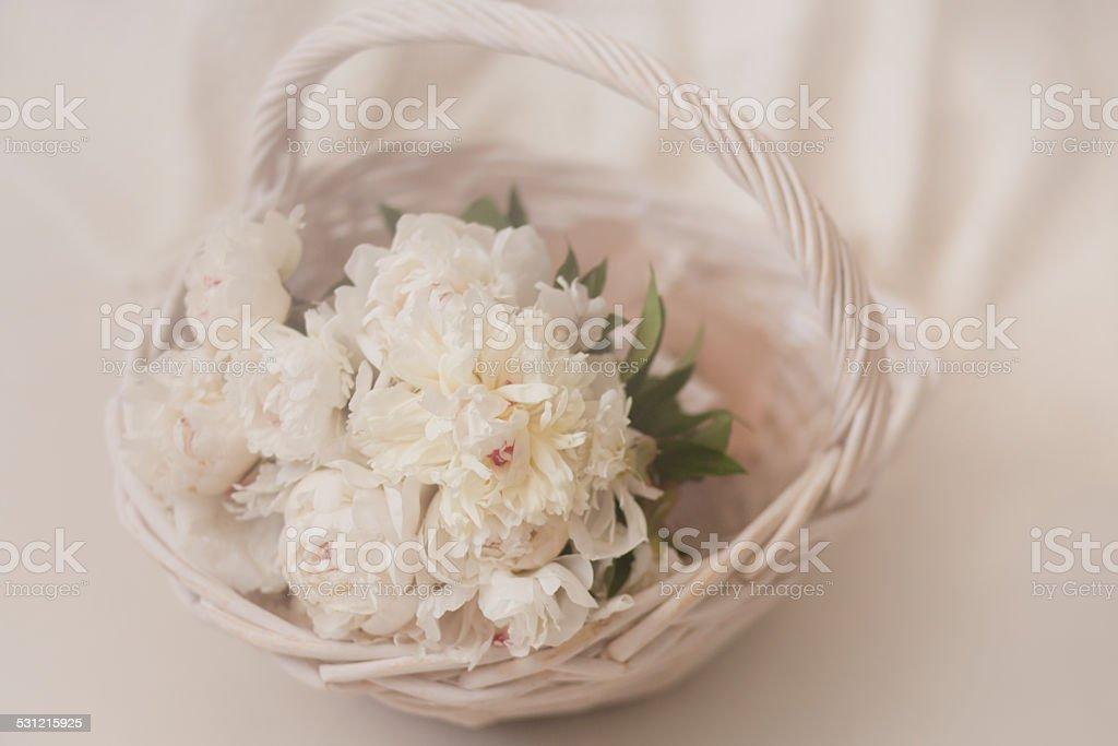 White Peonies royalty-free stock photo