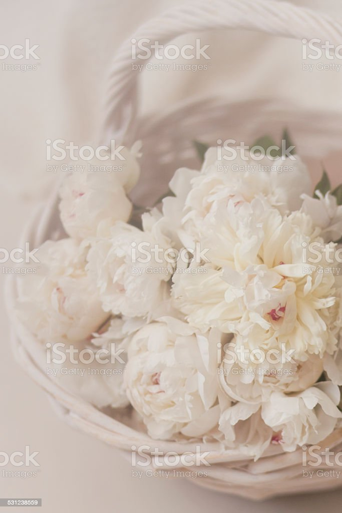 White Peonies royalty-free stock photo