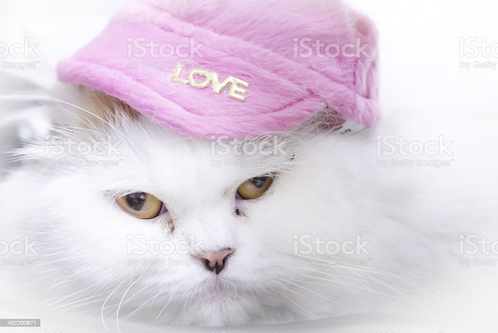white persian cat with pink hat royalty-free stock photo