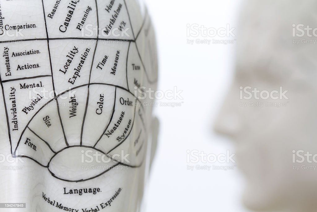 White phrenology head sculpture with charted labels stock photo