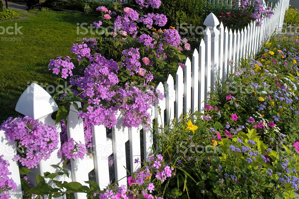 White Picket Fence with Phlox and Wildflowers stock photo