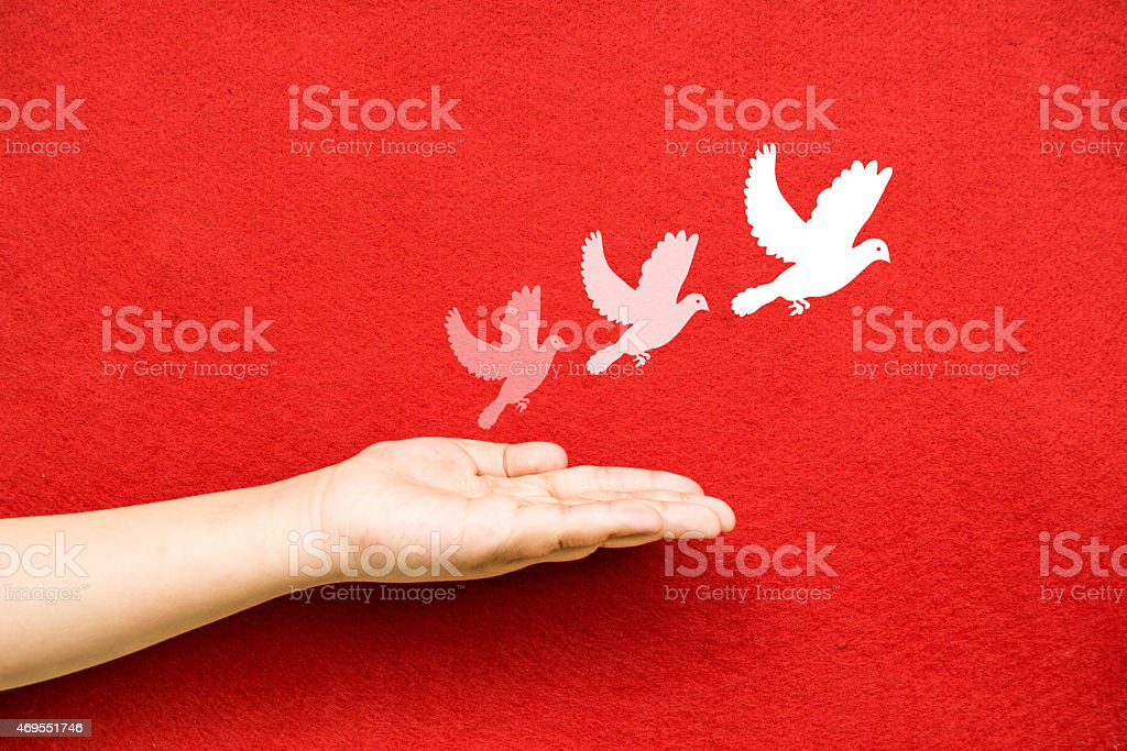white pigeon and freedom stock photo