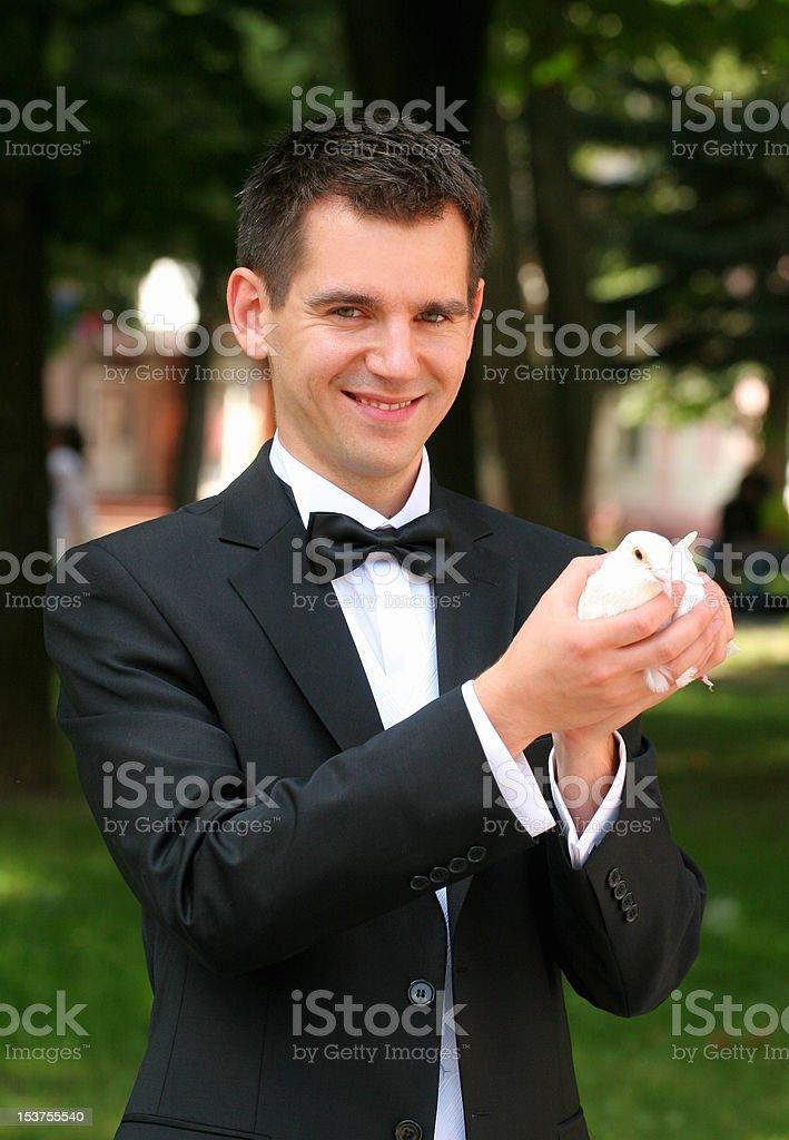 white pigeon royalty-free stock photo