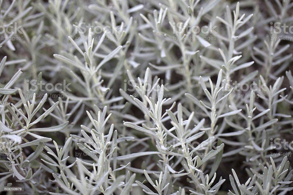 White plant in my garden stock photo