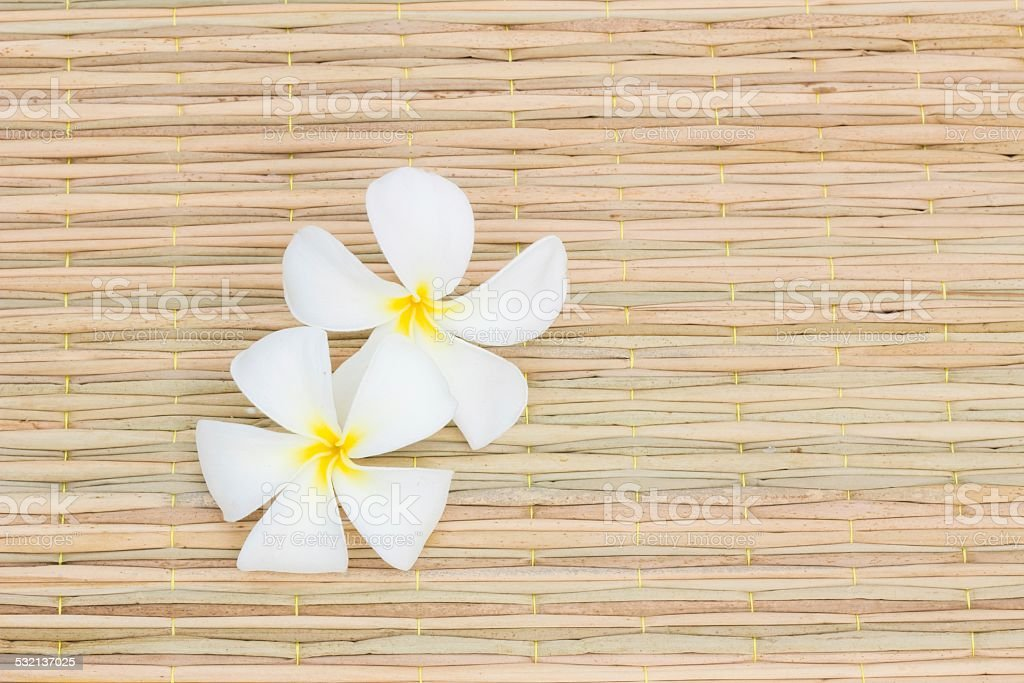 White Plumeria stock photo