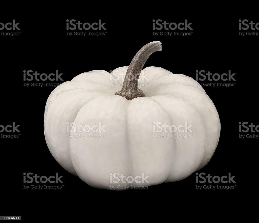 White Pumpkin on Black royalty-free stock photo