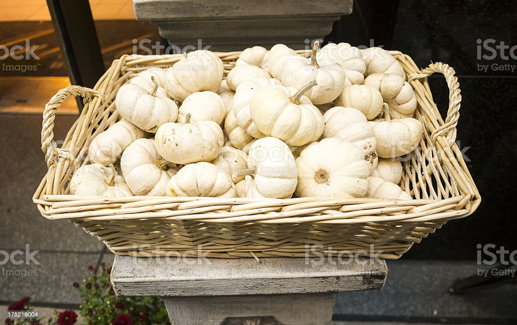 White Pumpkins in Basket royalty-free stock photo