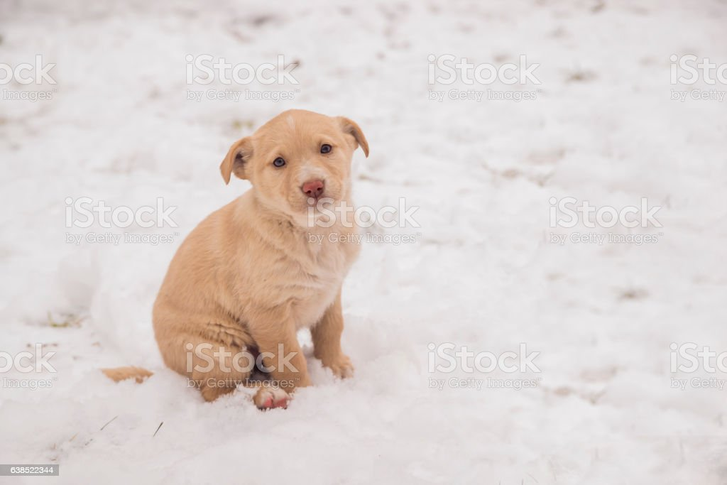 White puppy sitting in the snow,  dog portrait in winter. stock photo