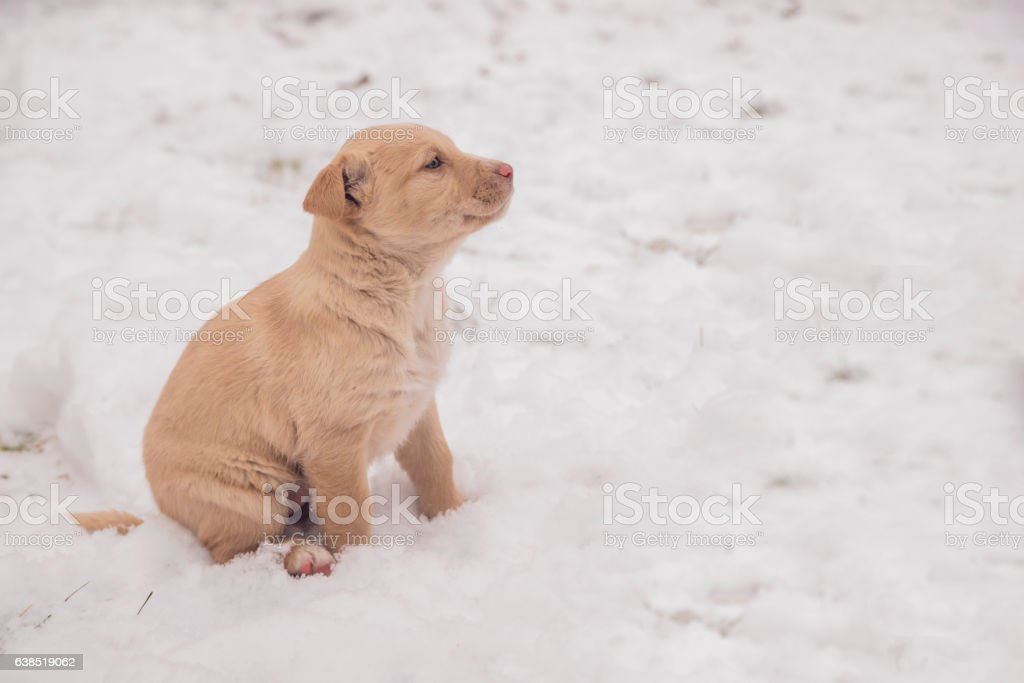 White puppy sitting in the snow, winter. dog  in winter. stock photo