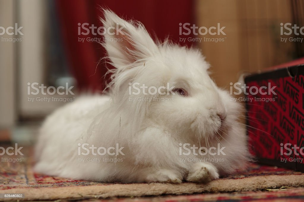 white rabbit from low angle stock photo