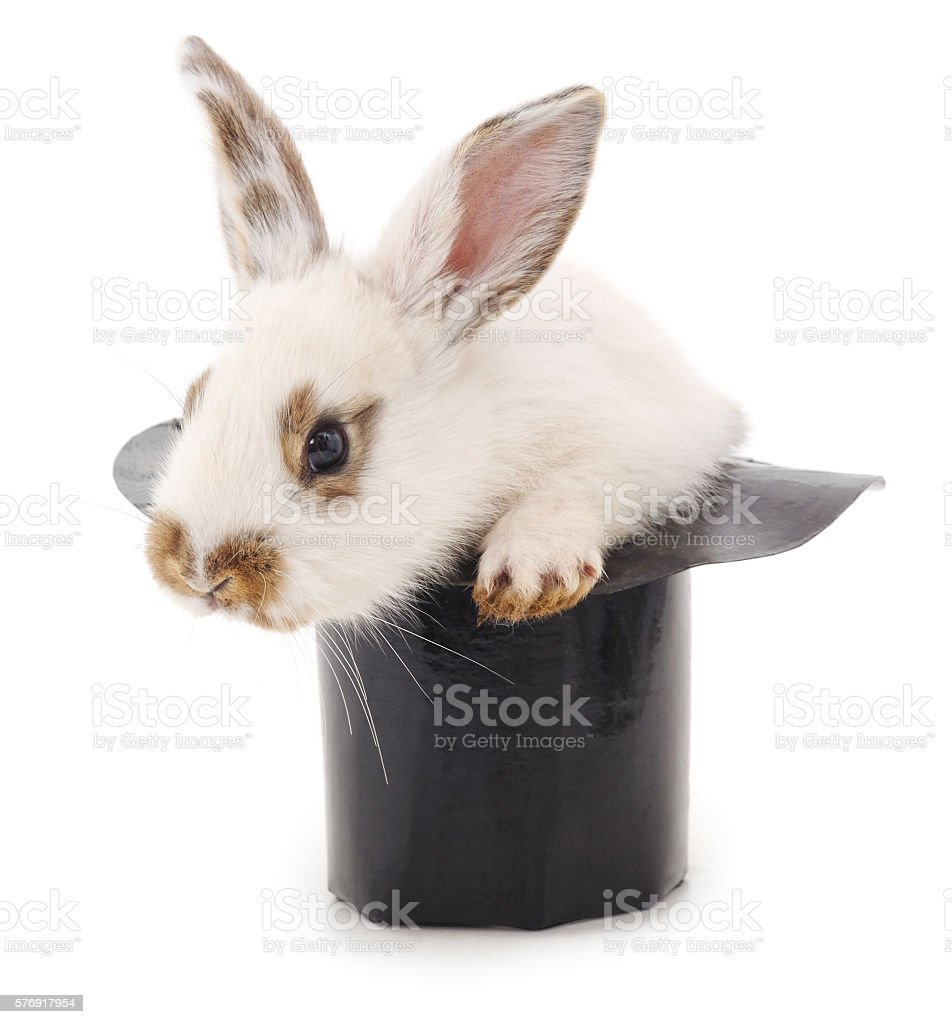 White rabbit in a hat. stock photo