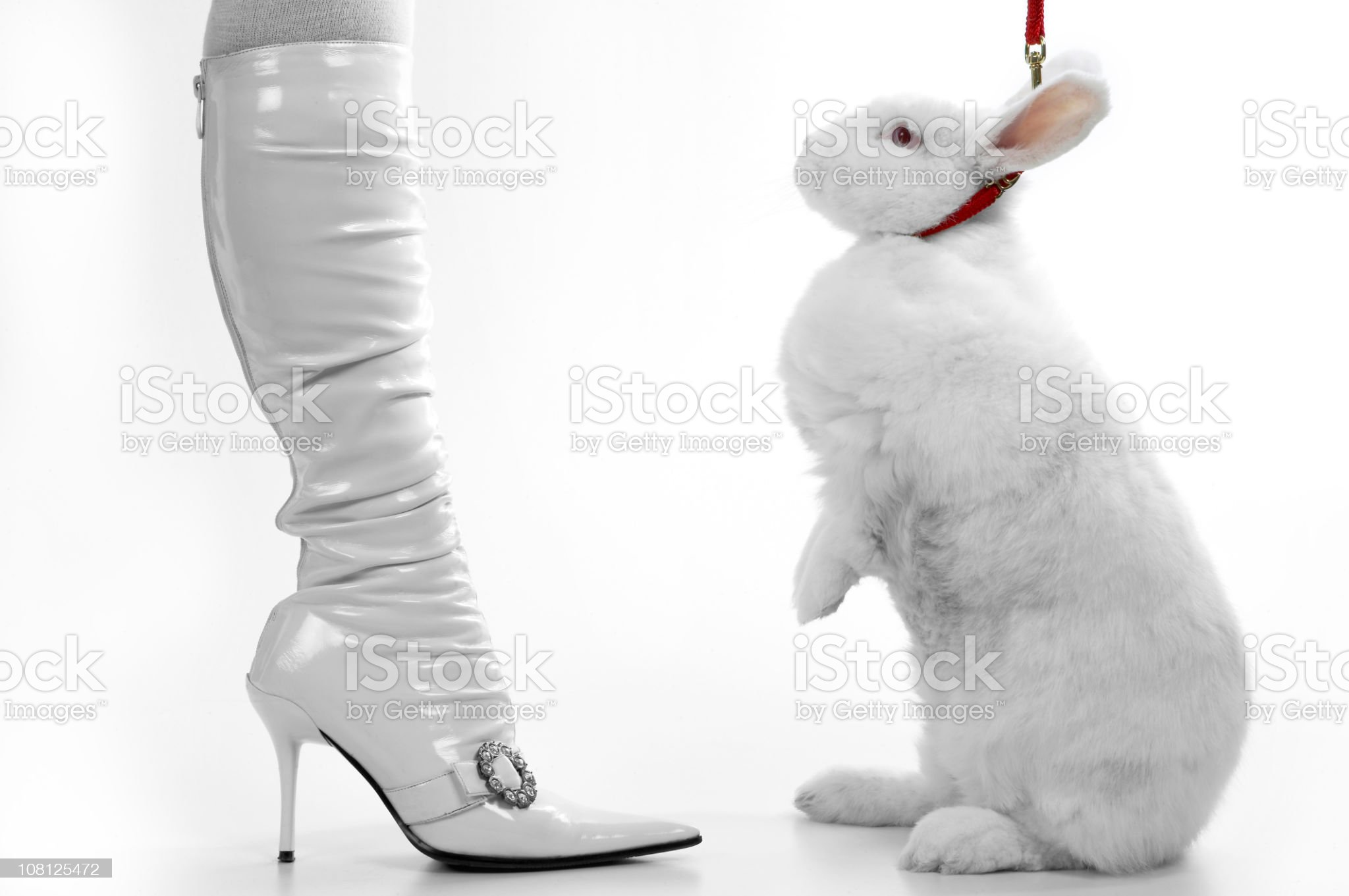 White Rabbit Standing with Woman in Boots royalty-free stock photo