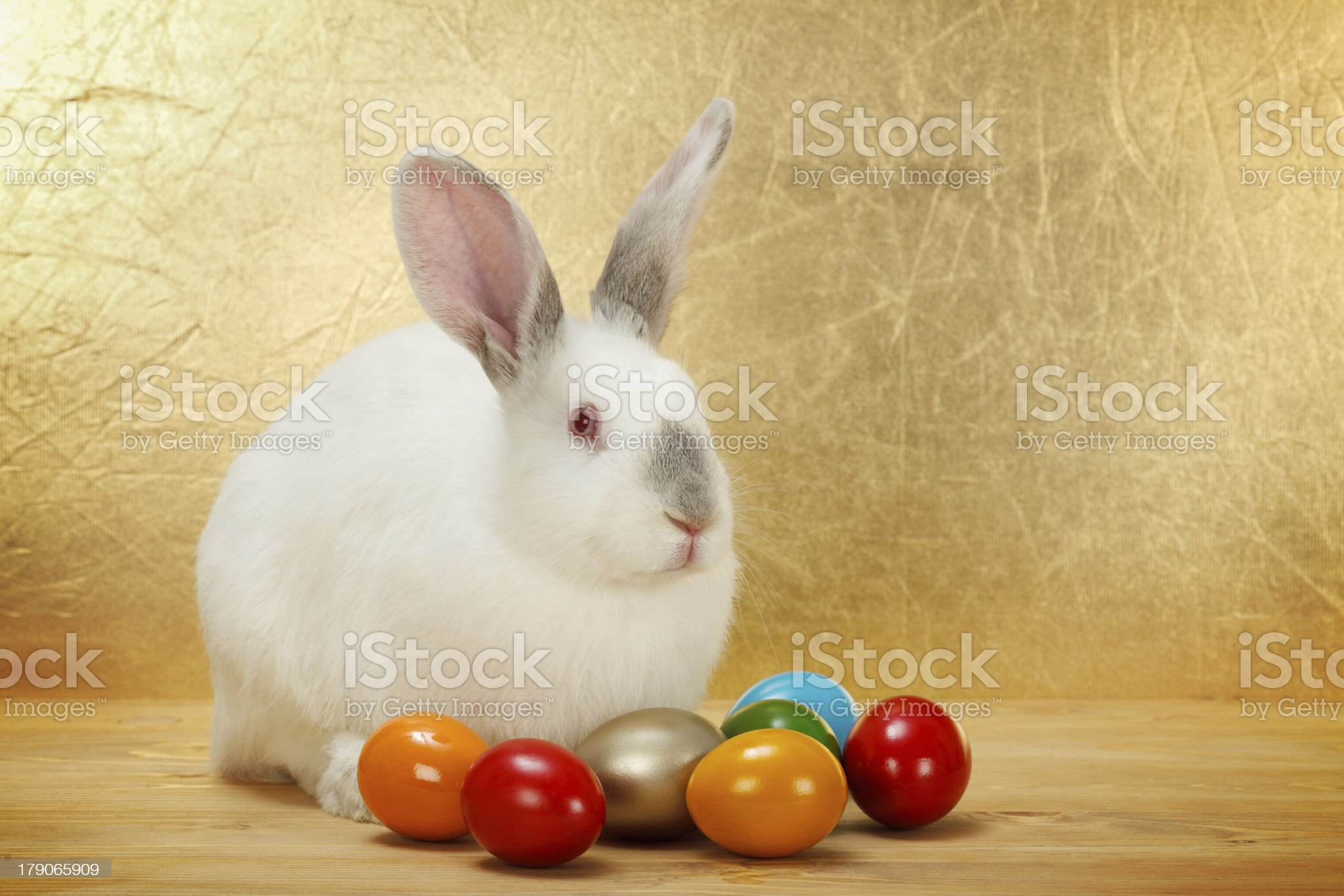 White rabbit with painted Easter eggs royalty-free stock photo