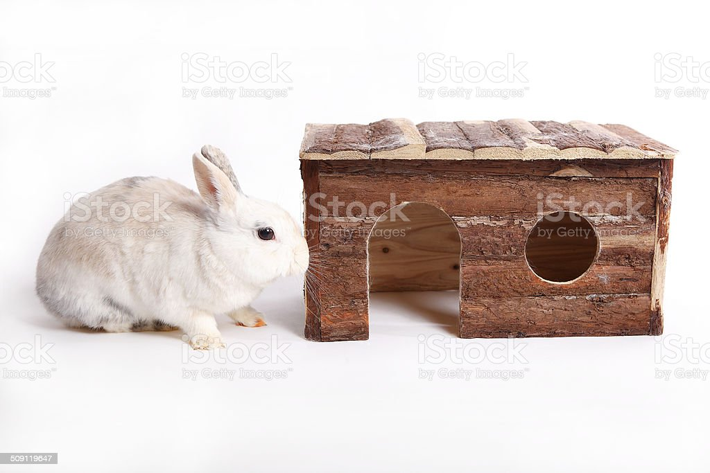 White rabbit with wooden house stock photo