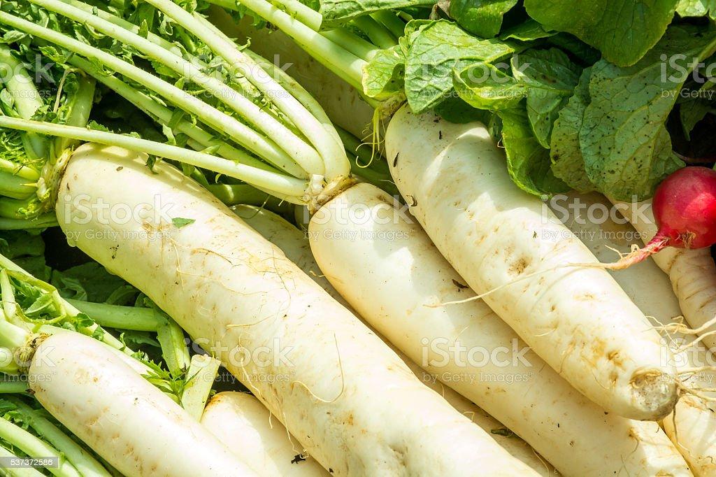 White Radishes In The Market stock photo