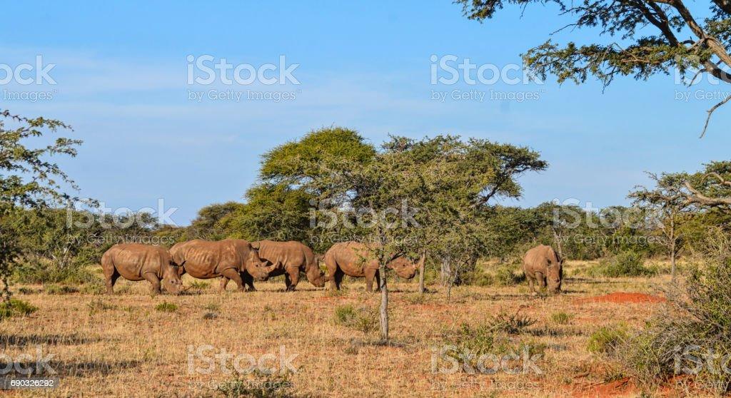 White Rhino Group stock photo