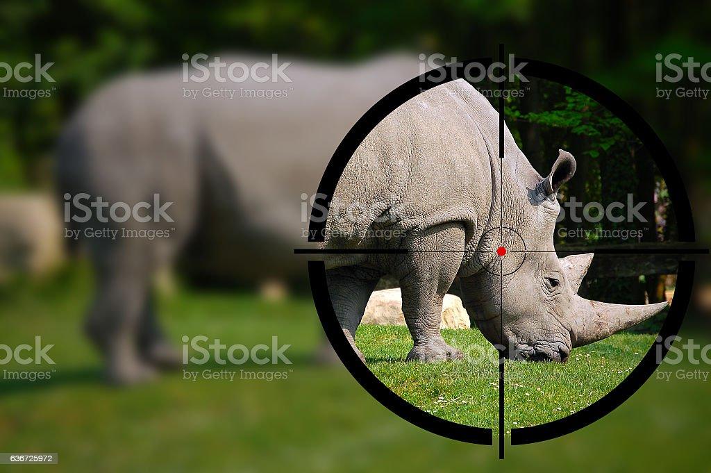 White Rhino in the Rifle Sight stock photo