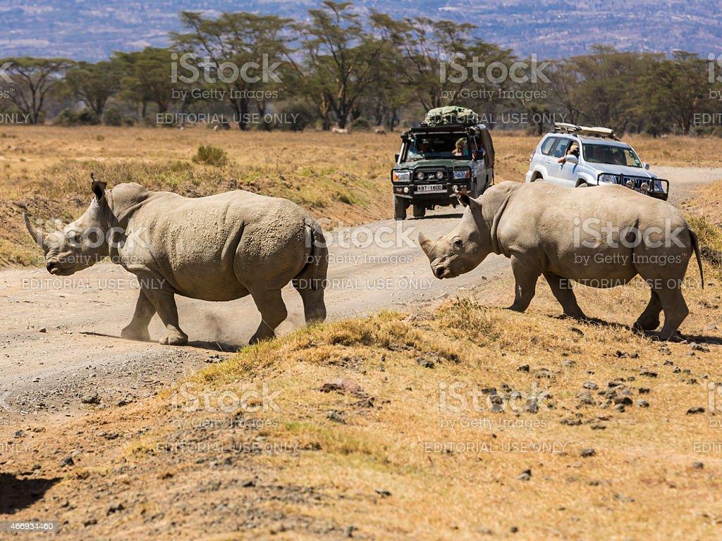 Tourists with Safari vehicles at Lake Nakuru national park and They...