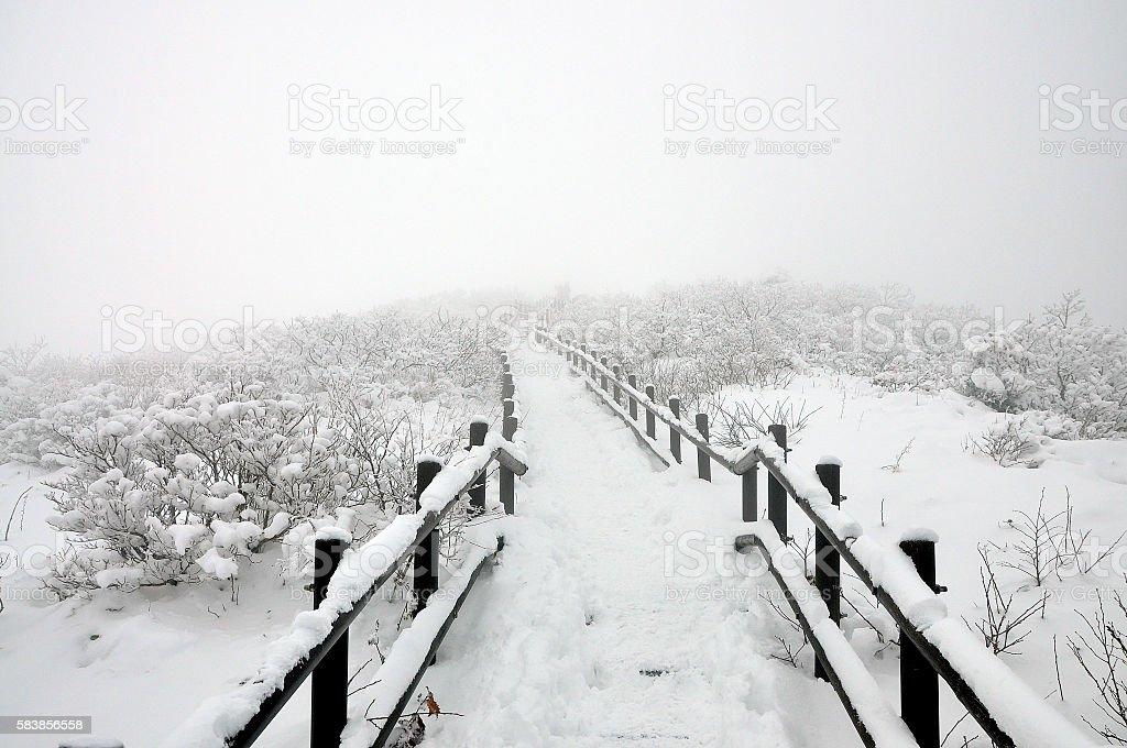 white road stock photo