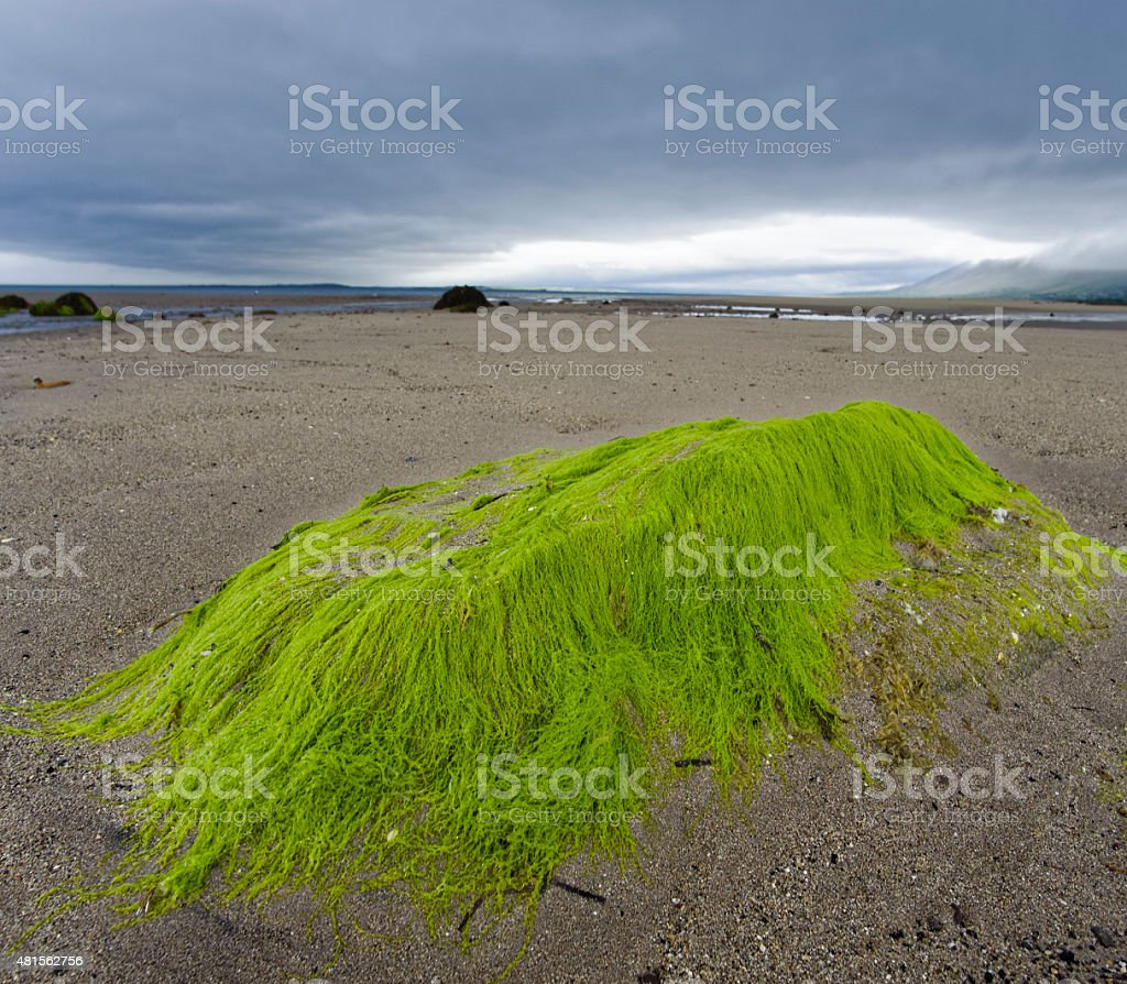White Rocks Beach in Northern Ireland stock photo